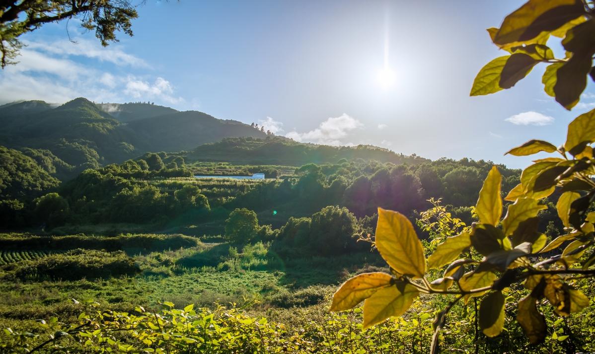 Der Lorbeerwald Los Tilos auf La Palma.