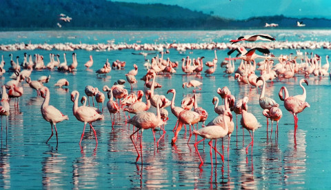 Der Lake Nakuru in Kenia