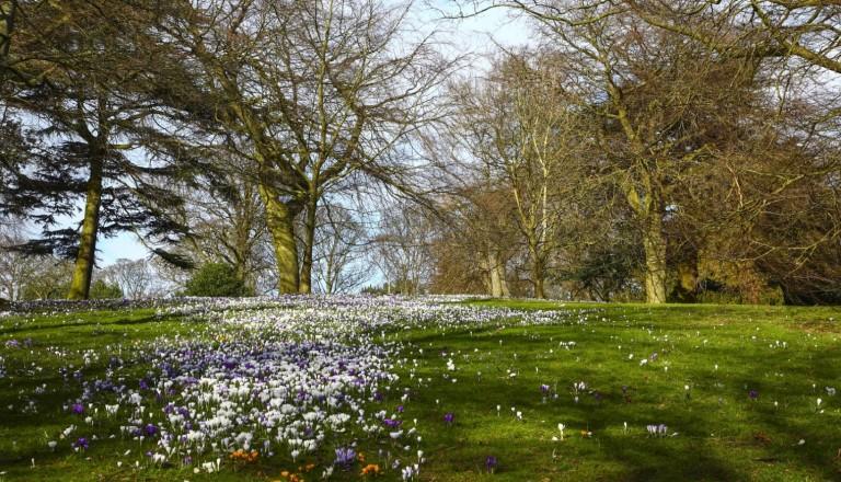 Der Frühling naht im Roudhay Park.