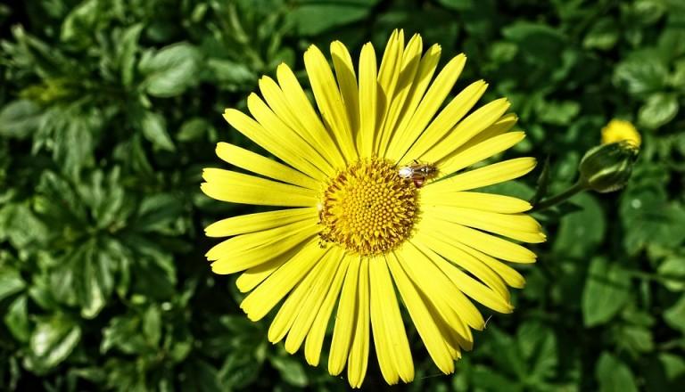 Mai Urlaub Sonnenblume.