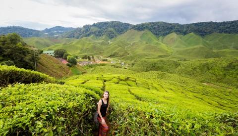 Malaysia Cameron Highlands