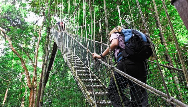 Der Nationalpark Taman Negara in Malaysia