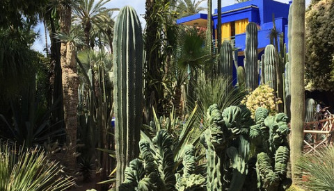 Der bezaubernde Jardin de Majorelle in Marrakesch.