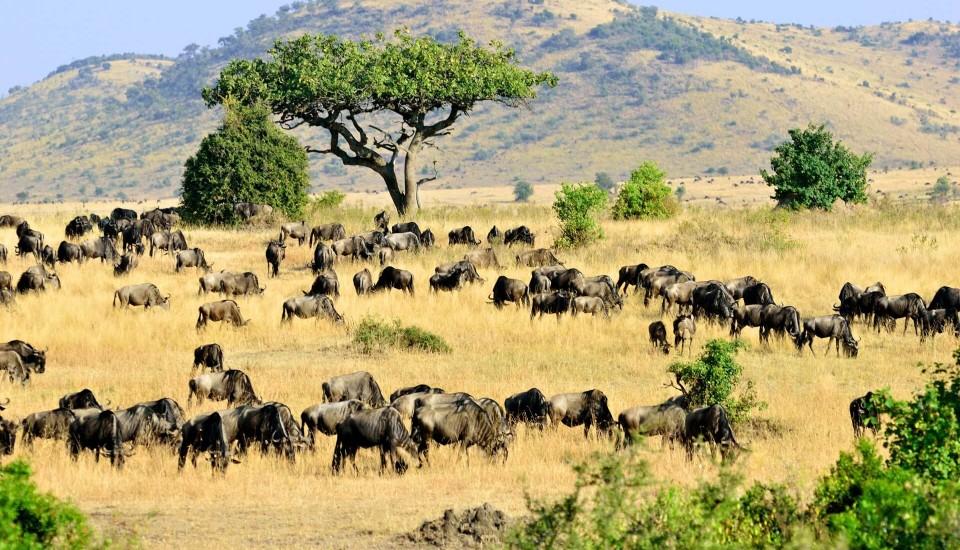 Masai Mara Nationalpark