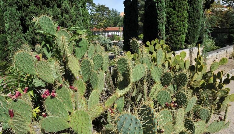 Die botanischen Gärten von Montpellier.