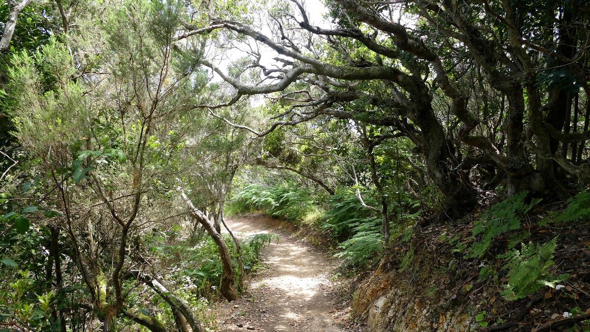 Der Nationalpark La Garajonay auf La Gomera.