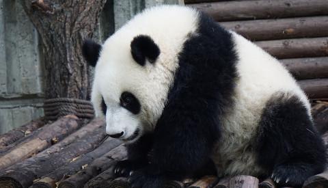 Der Zoo von Chiang Mai ist ein beliebtes Ausflugsziel.