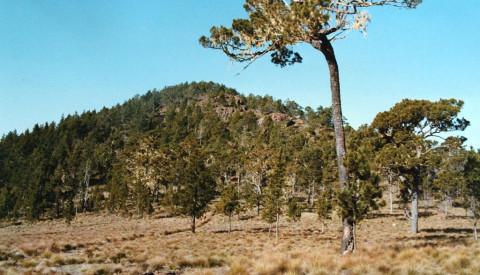 Der Pico Duarte ist mit über 3.000 Metern die höchste Erhebung der Insel.