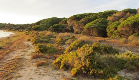 Rottnest Island bei Perth