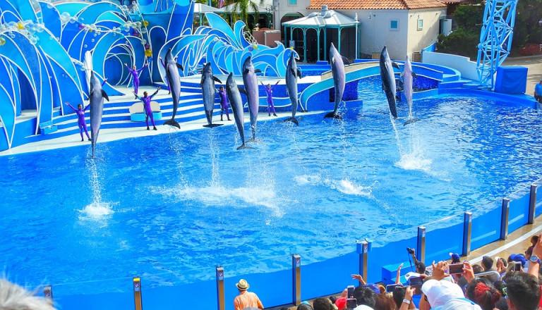 Tolle Shows finden in der Sea World in San Diegostatt.