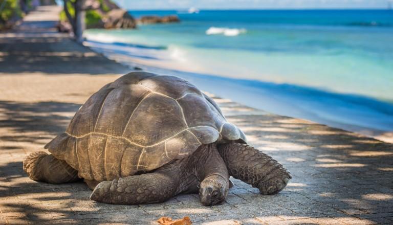 Seychellen Schildkröte