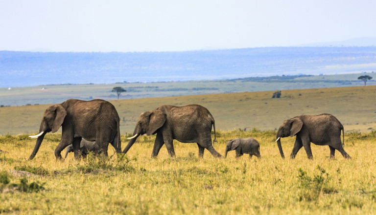 sri lanka natur elefanten