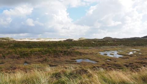 Die Braderuper Heide auy Sylt