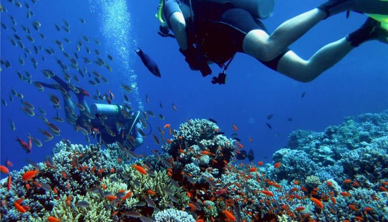 Tauchen Urlaub Riff