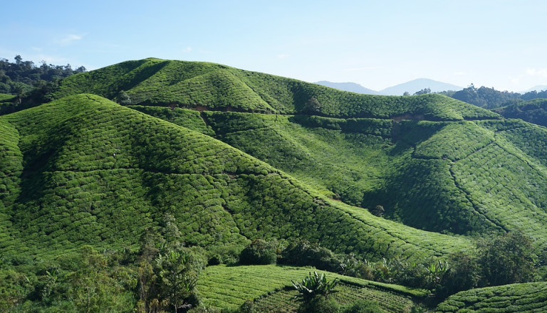Rundreisen Cameron Highlands