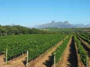 Südafrika - Stellenbosch Weinbaugebiet