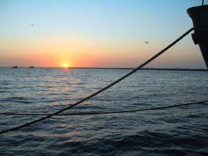 Walvis Bay ist der ideale Ausgangspunkt für Bootstouren