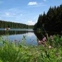 Natur im Harz