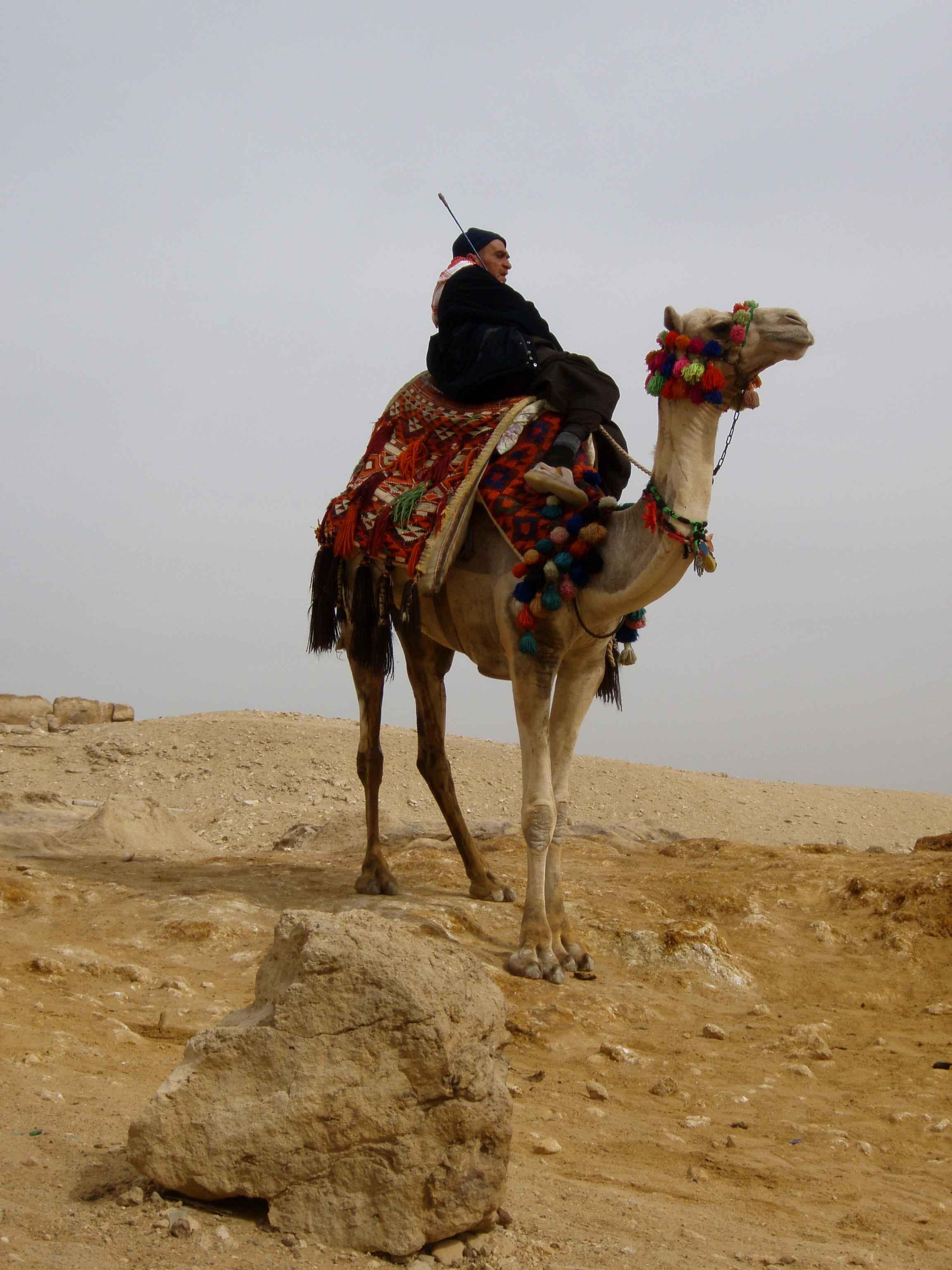 Beduine in der Wüste Sinai