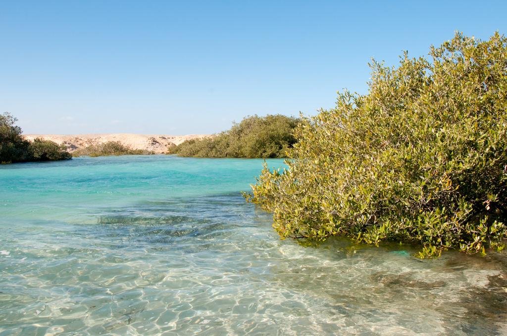 Mangroven im Nationalpark Ras Mohammed