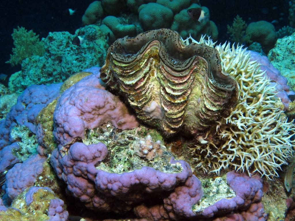 Korallen am Paradise Reef