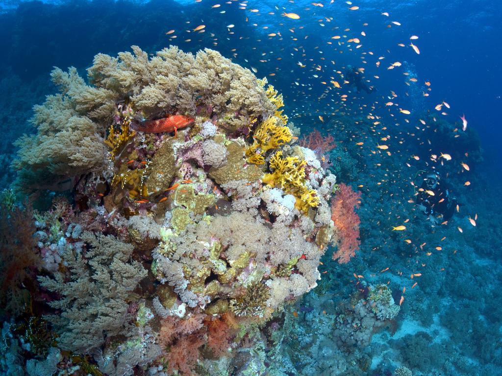 Korallenvielfalt am Shark Reef