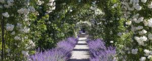 Im Garten von Schloss Egeskov