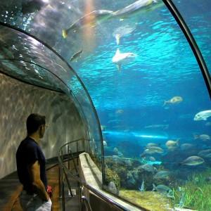 Aquarium, Barcelona, Spanien
