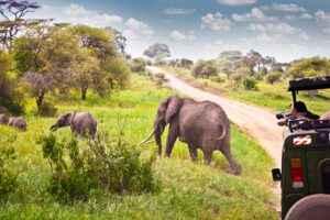 Elefanten Safari