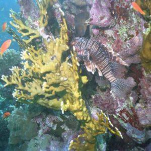 Korallen, Rotes Meer, Ägypten