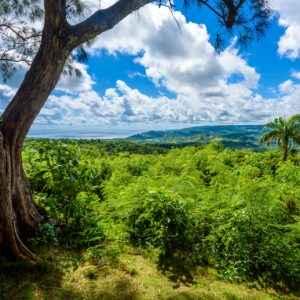 Die vielfältige Natur auf Barbados lädt zum Wandern ein.