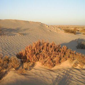 Sahara-Wüste, Tunesien