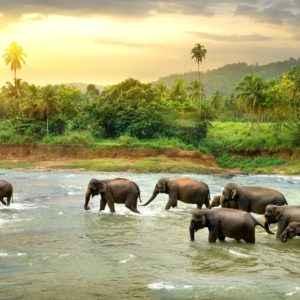 Elefanten auf Sri Lanka
