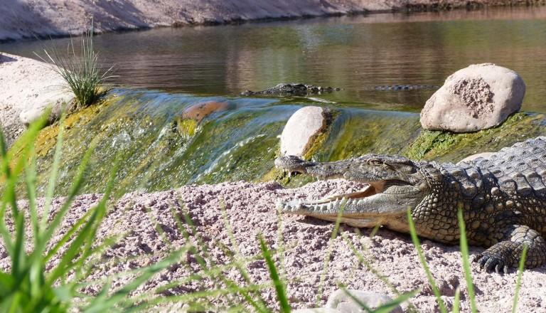Agadir-Crocoparc