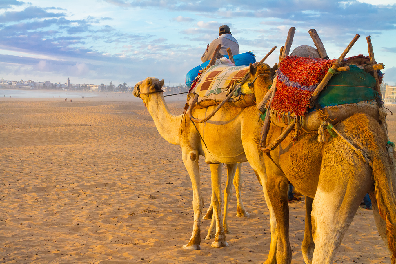Agadir-Kamel-Safari