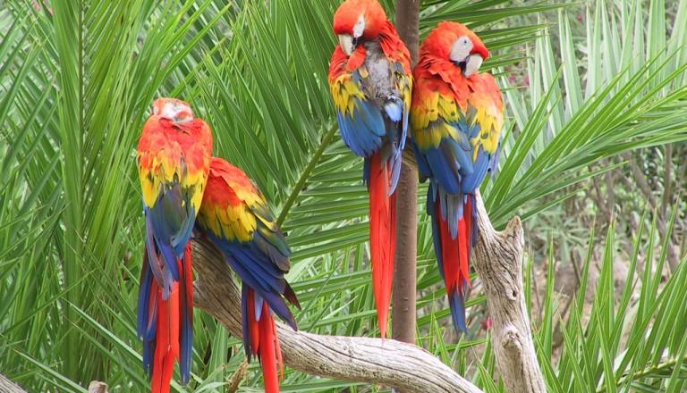 Agadir-Vogelpark-La-Vallee-des-Oiseaux.