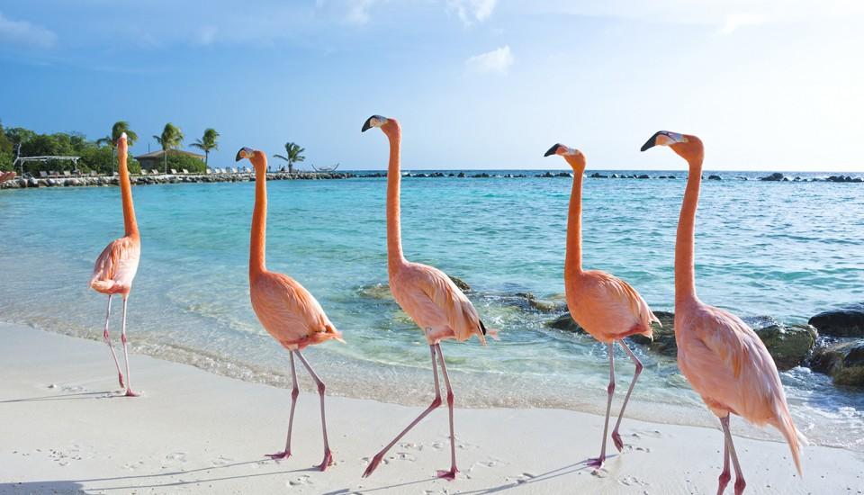Aruba-Pauschalreise