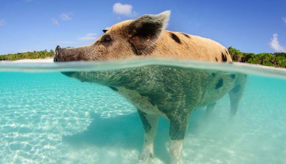 Bahamas-Pauschalreisen