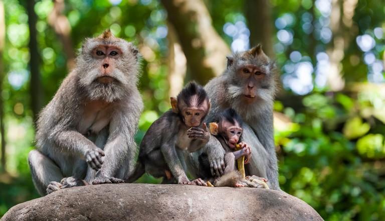 Bali-Ubud-Monkey-Forest.