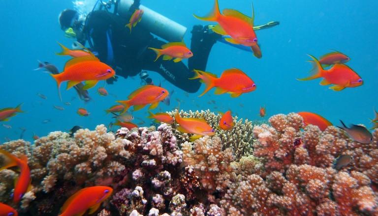 Unterwasserwelt Tauchen Belek