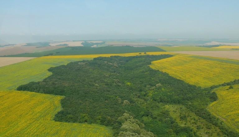 Bulgarien - Donautiefebene