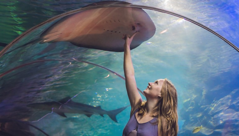Dubai - Aquarium und Underwater Zoo