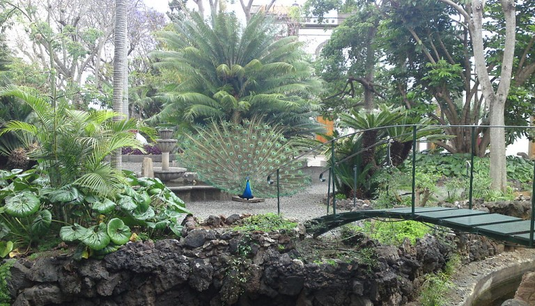Gran Canaria - Botanic Gardens in Arucas