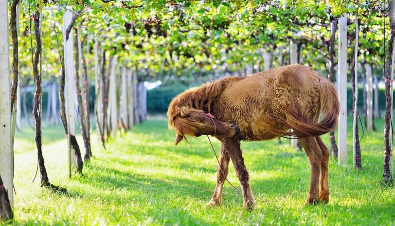 Ibiza - Horse Valley