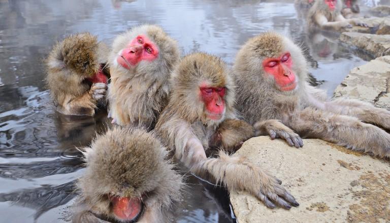Japan-jigokudani-Monkey-Park