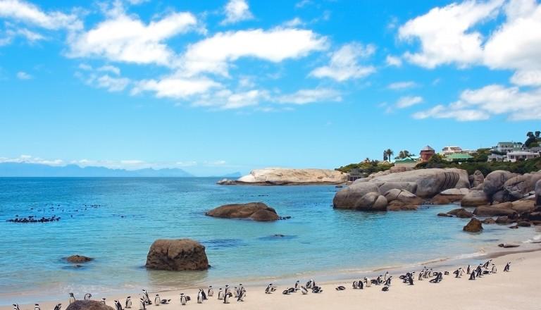 Kapstadt-Boulders-Beach