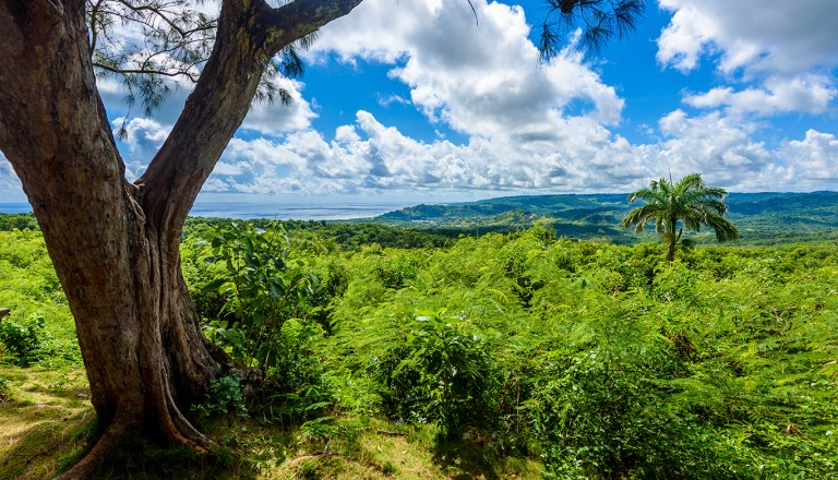 Karibik-Barbados-Wildlife-Reserve