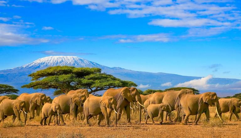 Kenya-Masai-Mara.