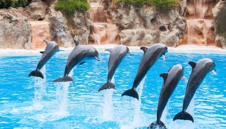 Kuba - National Aquarium