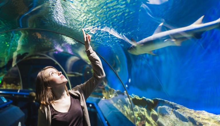 Melbourne-Sea-Life-Aquarium.